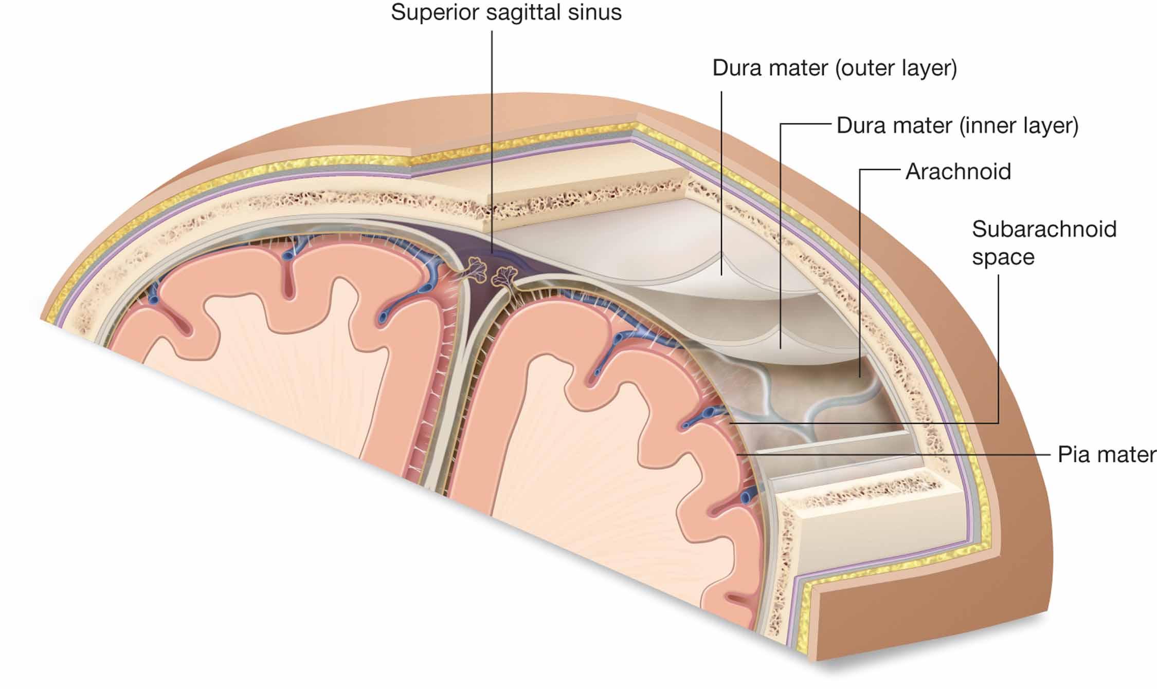 Dura mater- hoofdpijn